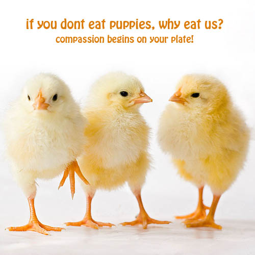 Compassion for all beings begins on our plate. When our love expands
